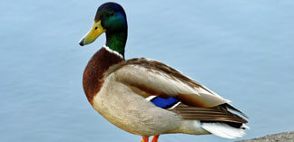 Like Sitting Ducks–Two Failure-Prone Outsourcing Models